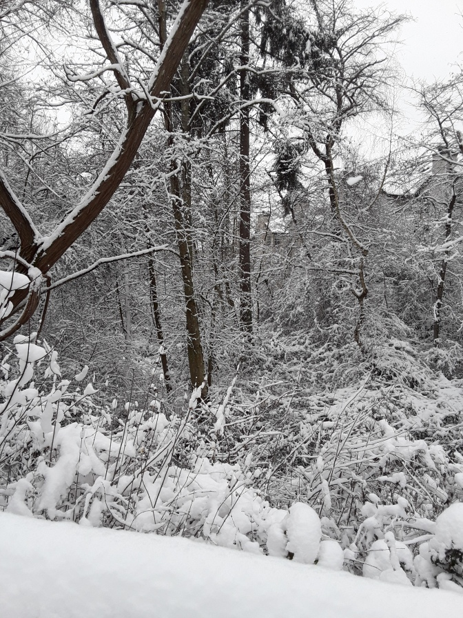 Winter 2018/2019 Photo Gallery
