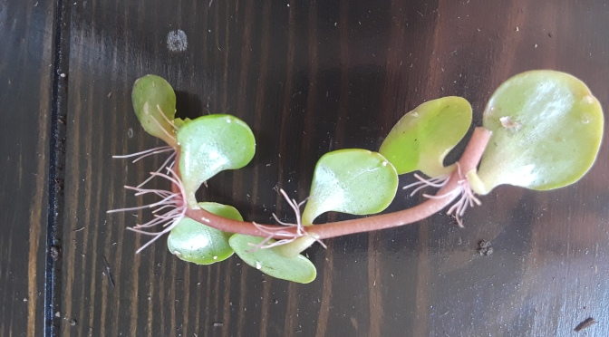 Adventures in Houseplant Propagation